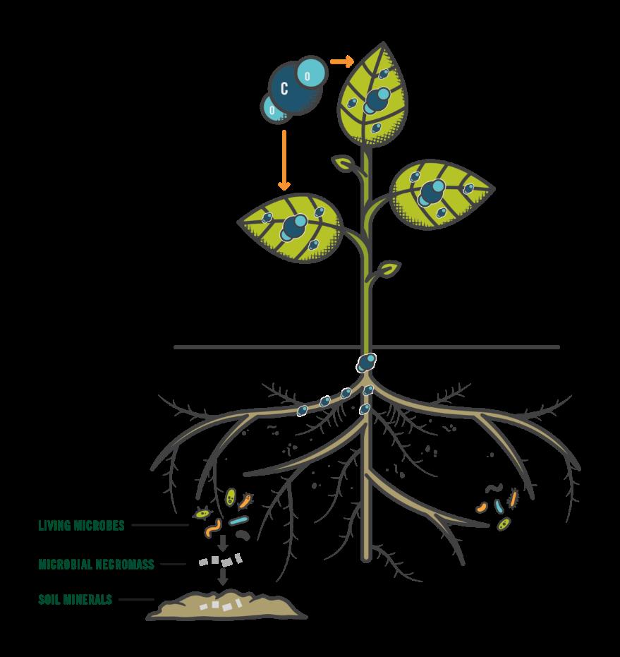 Rodale-Soil-Carbon-White-Paper_v8-8